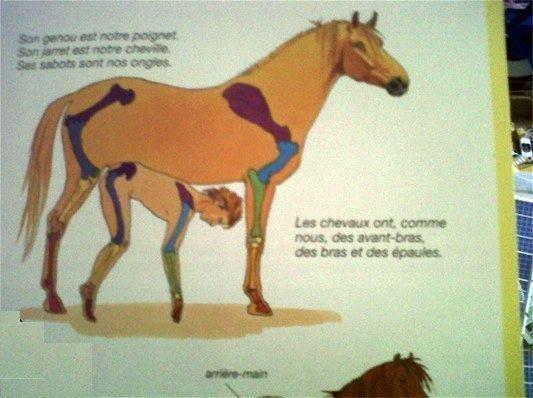 kids-book-french-anatomy