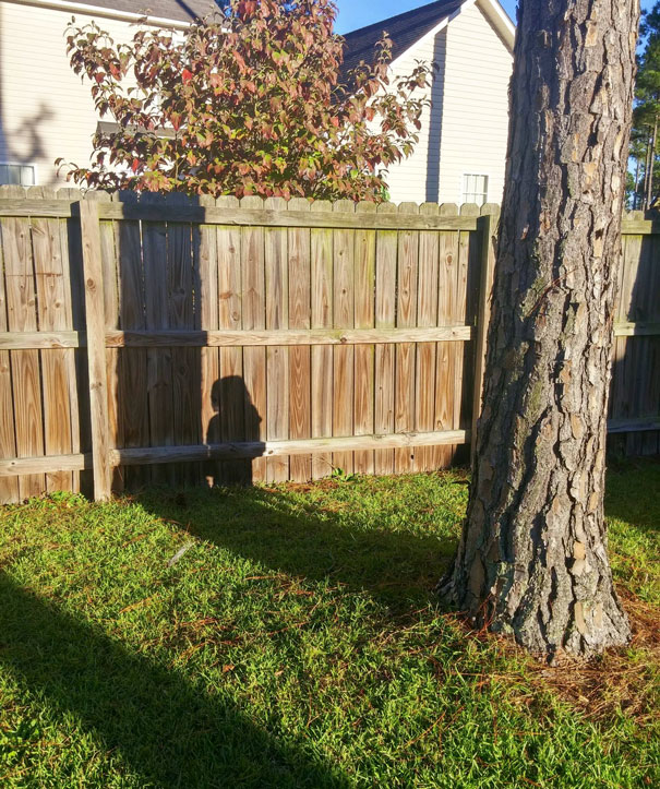 funny-kids-playing-hide-and-seek-251__605